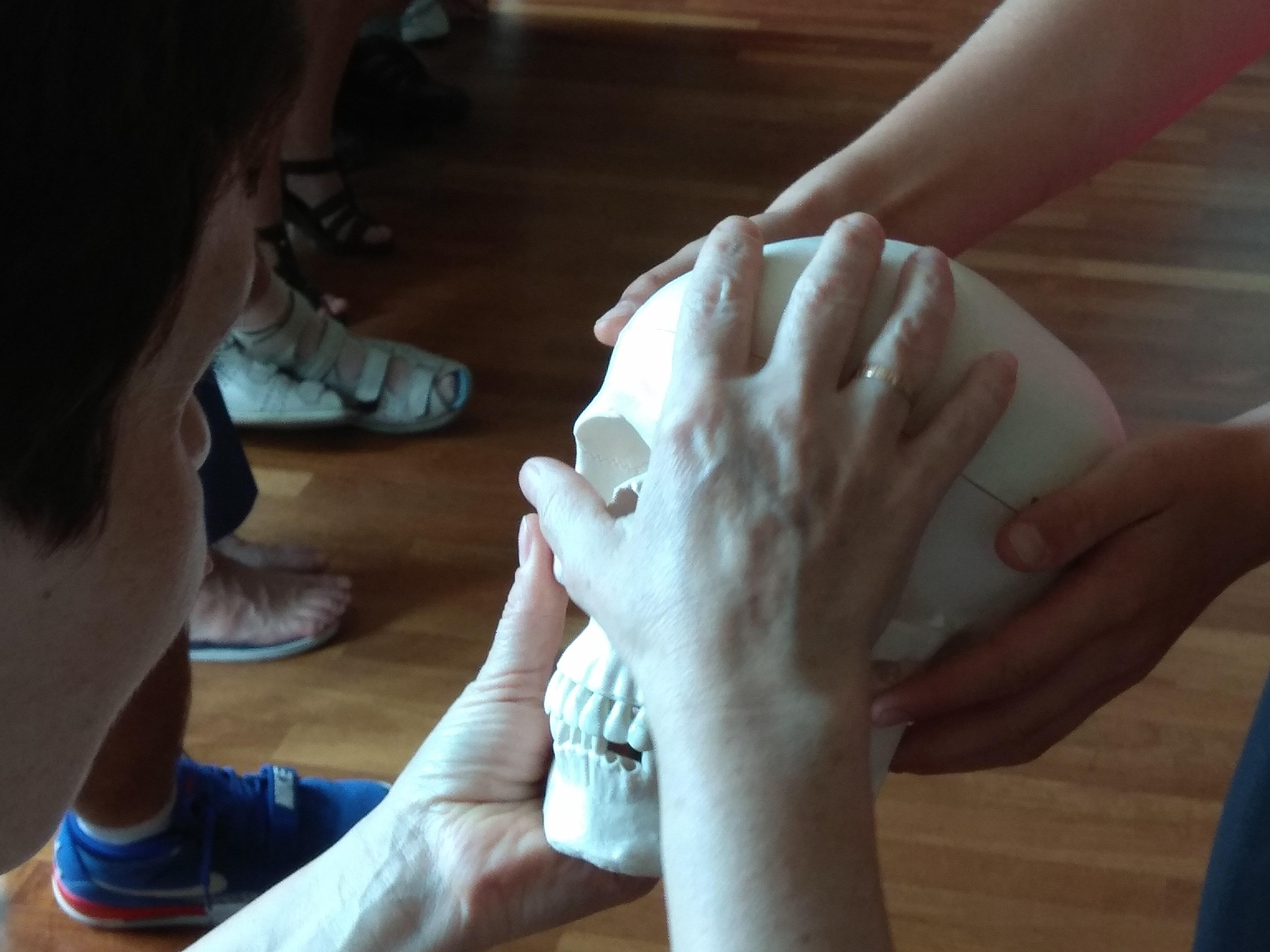Dwoje uczestników poznaje dotykiem model czaszki ludzkiej.