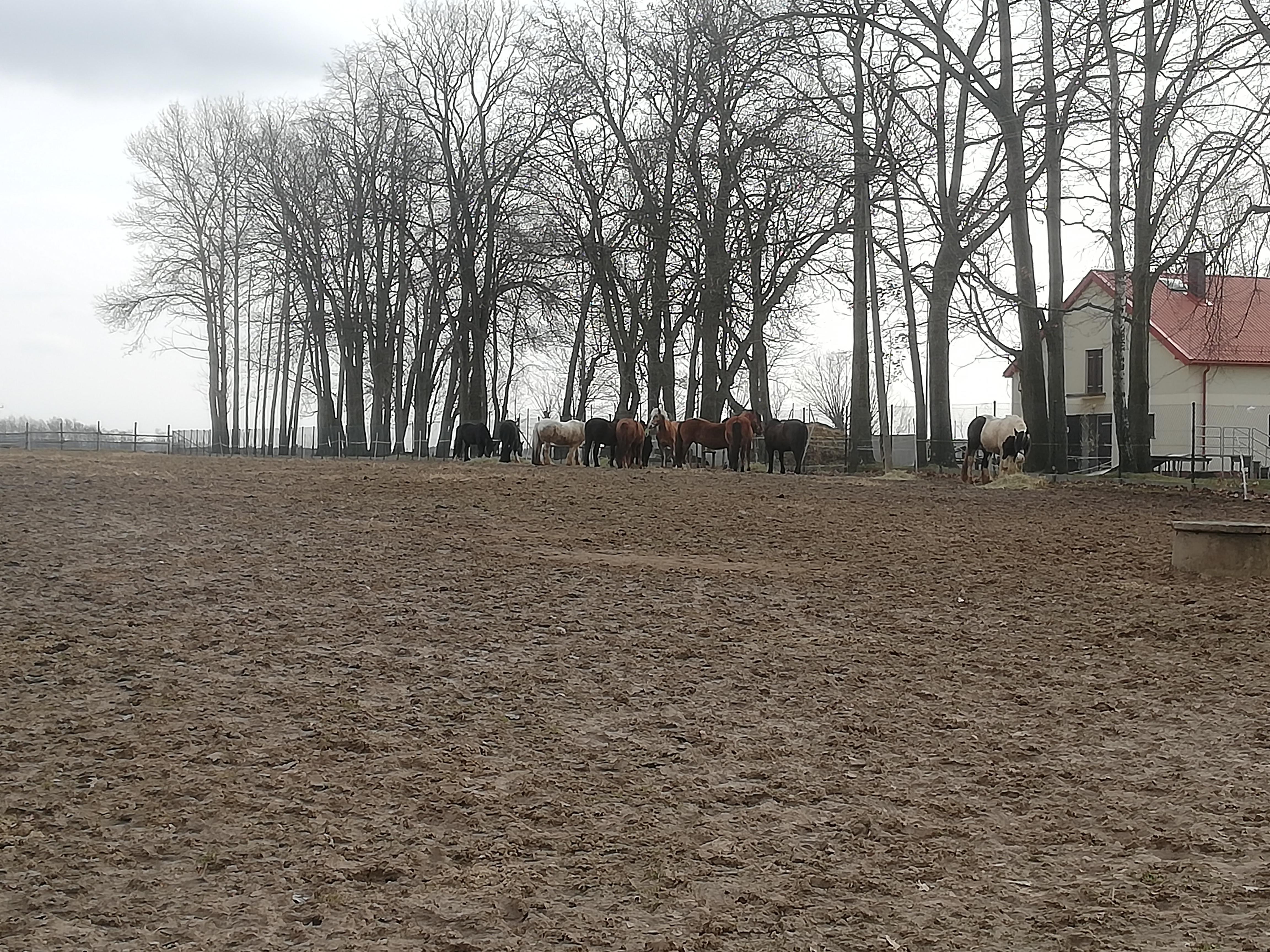 Przedwiośnie – na pierwszym planie widoczna brunatna ziemia, w oddali stado koni pośród wysokich bezlistnych drzew, z prawej biały dom ze strzelistym, czerwonym dachem.