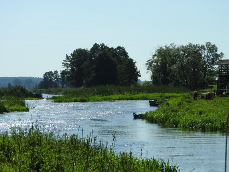 Wiosenno – letni pejzaż z okolic ośrodka z rozlewiskiem wodnym